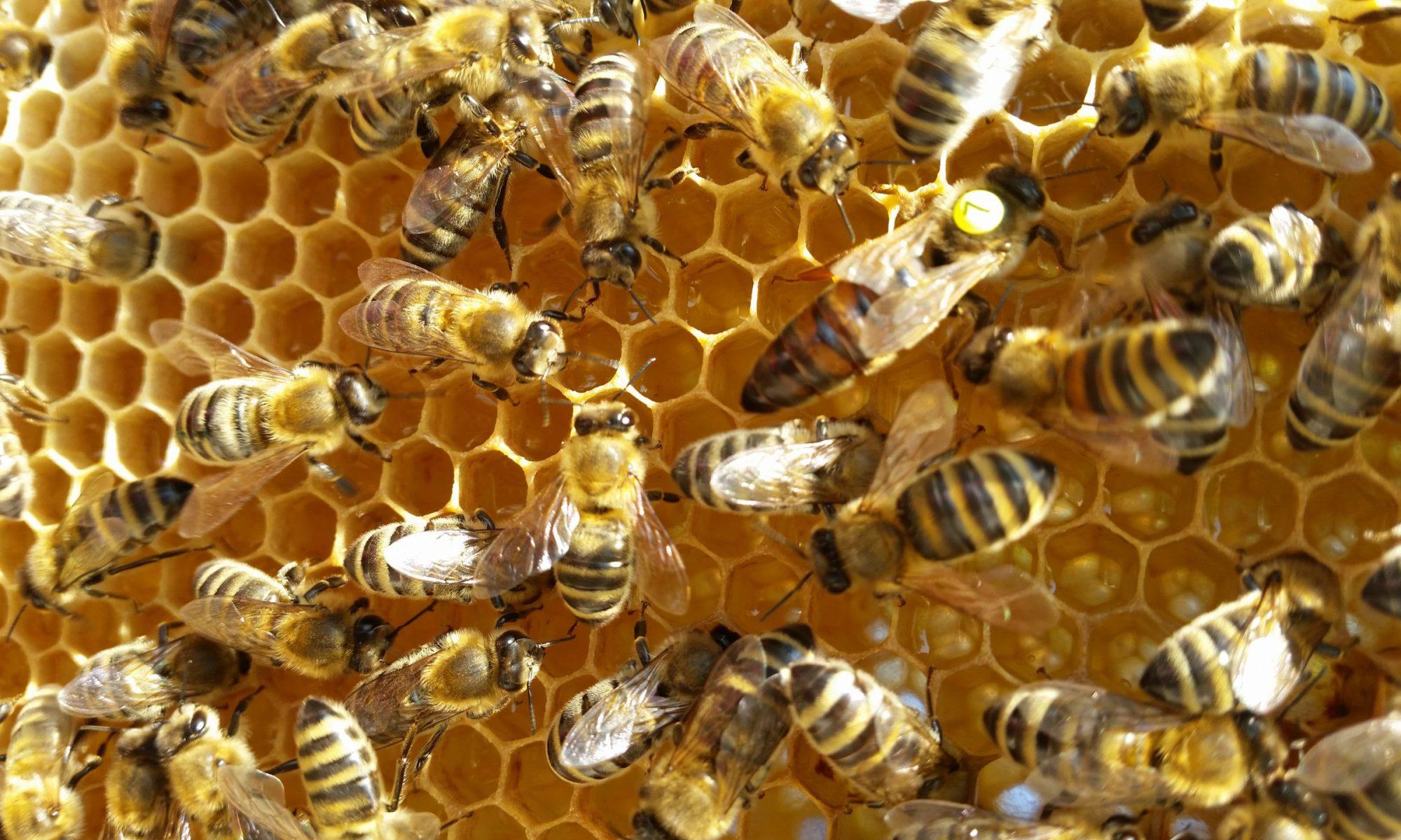 Bienenzuchtverein Forstinning